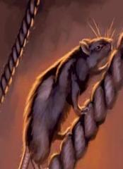 #105 Rats