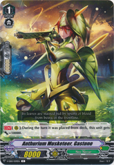 Anthurium Musketeer, Gastone - V-EB10/059EN - C