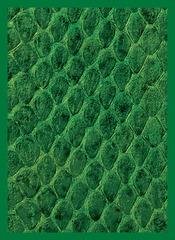 Dragon Hide Art Sleeves Green (50)